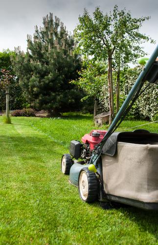 Jardinier lille entretien espace vert nord 59 for Travaux de jardinage