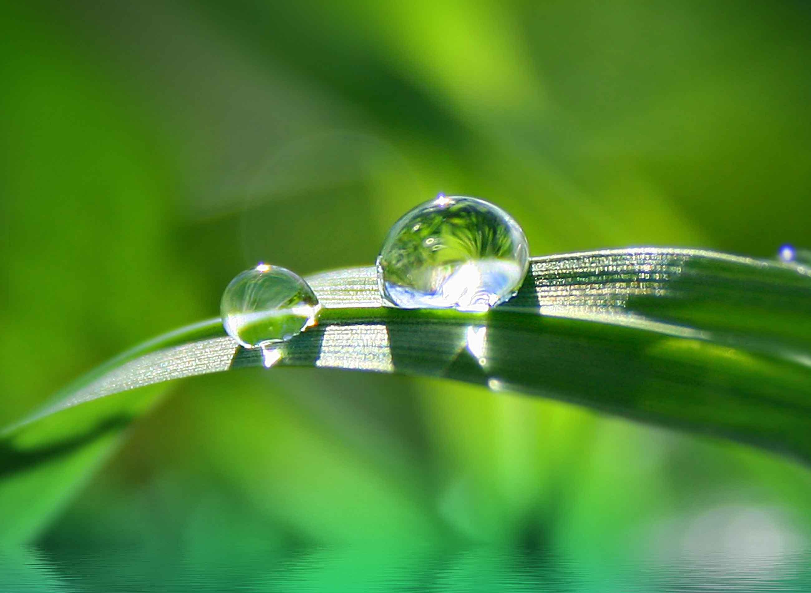 Jardinier paysagiste lille cr ation entretien jardin for Creation espace vert